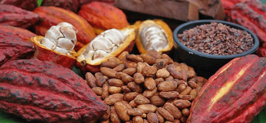 cacao-fin ambanja