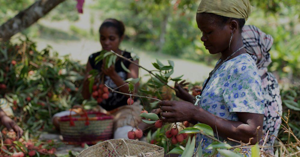 Femmes manipulant des fruits de litchi - Madagascar © CDC Group